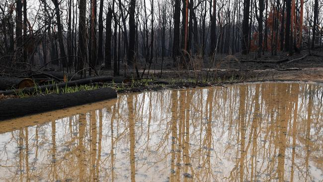 Bushland is seen burnt by fire as rain pools in large puddles at Bilpin, in the Blue Mountains. Picture: AAP Image/Dan Himbrechts