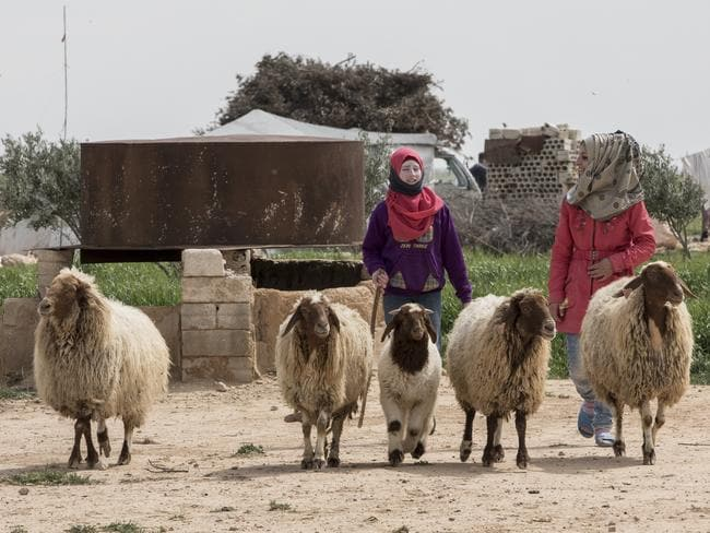 Many of the Holaya families combine their sheep in a flock with other family members and neighbours. Picture: Ella Pellegrini
