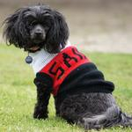 Tiny the 11-year-old toy poodle cross may be tiny but she is a HUGE St Kilda fan. When footy season starts and the weather gets cooler, she loves to wear her footy jumper on her daily walks to keep her warm and to show off her team's colors. Picture: Frank Diane Raabe, Rosebud