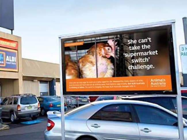 Animals Australia applauded Aldi on their move to phase out eggs produced from caged hens. Picture: Animals Australia