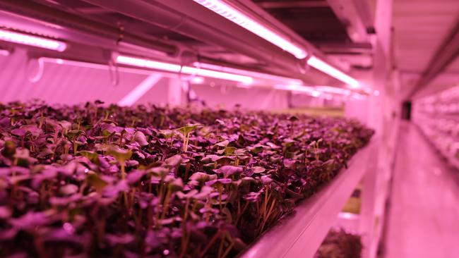 Londoners can now tour the tunnels to learn about the farm. Picture: Flickr/Zero Carbon Food