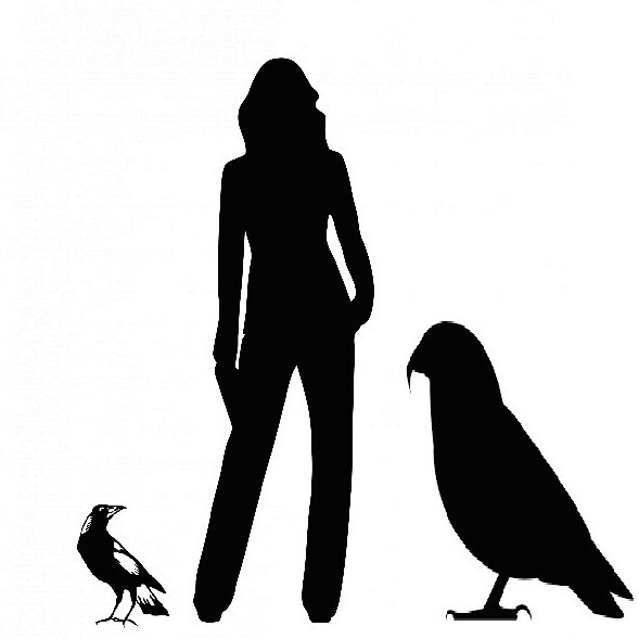 An artist impression of <i> Heracles inexpectatus</i>, the world's largest parrot, standing next to an adult by Professor Paul Scofield, Canterbury Museum.