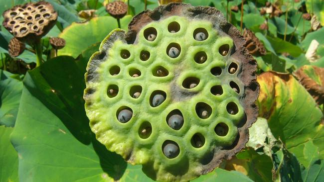 Trypophobia The Fascinating Science Behind A Fear Of Irregular Holes