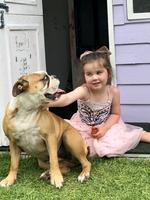 Dash the bulldog with Quinn playing in the cubby house. Picture: Nola Larkin