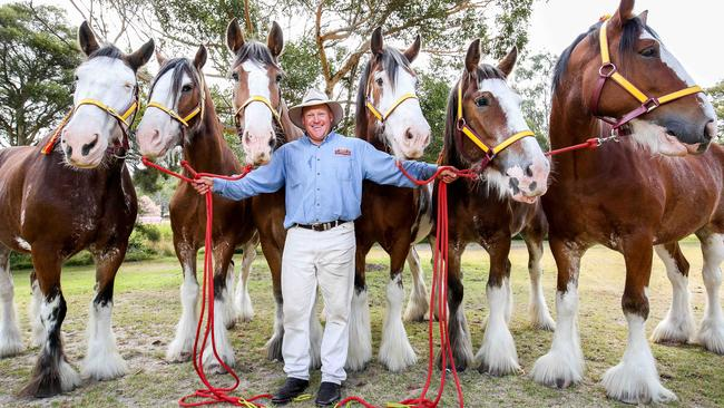CUB senior teamster Scott Goodall with the final six Clydesdales named Murphy, Henry, Al, Parker, Hamish and Andy. Picture: Nicole Cleary