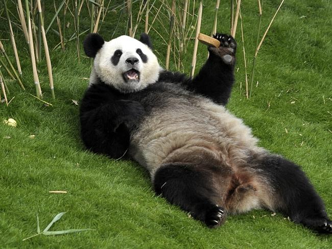 What Do Chinese Pandas Have To Do With Mh370