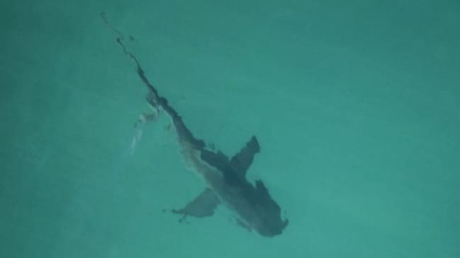 Extra surf life saving crews were called in to help monitor the unusual situation. Picture: NSWSharkSmart