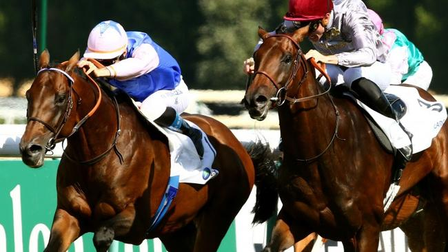 Tiberian (left) is a $21 chance in the Melbourne Cup.