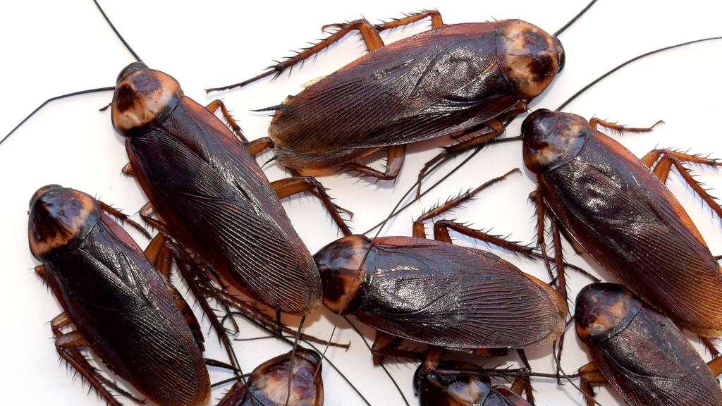 What To Do When A Flying Cockroach Attacks You In Your Own Bathroom - Cockroach in bathroom