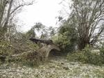 A giant tree lays fallen over fencing after a super cell storm tore through Long Flat south of Gympie. Photo Lachie Millard