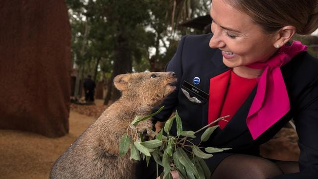 Davey the quokka from WILD LIFE Sydney Zoo shares a laugh with Qantas flight attendant Kersha Johnson.