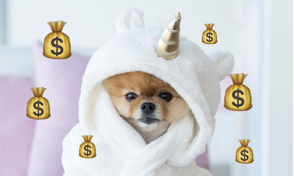 This dog earns more than most of us and it's just depressing