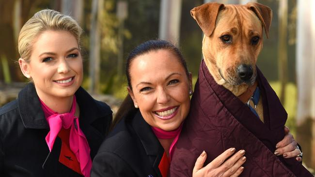 Qantas Donates Old Blankets And Doonas To Rspca