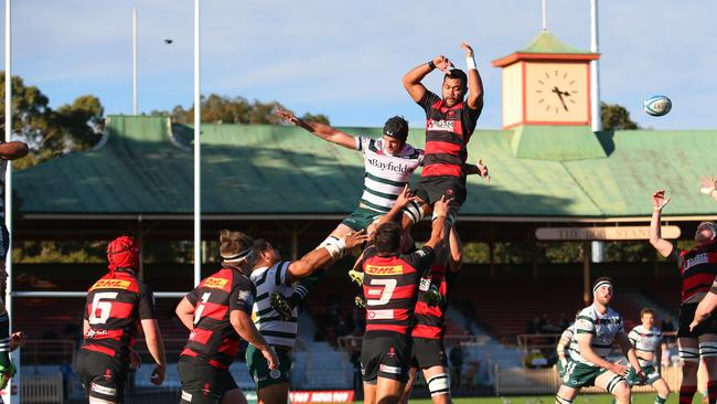 New south wales rugby union shute shield betting binary options bully results from super