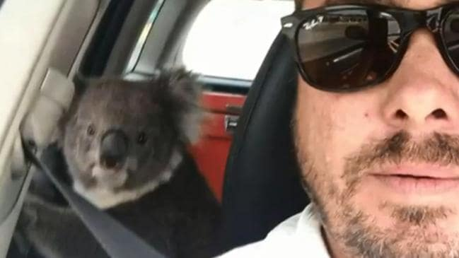 Tim Whitrow finds koala in his backseat. Picture: Facebook