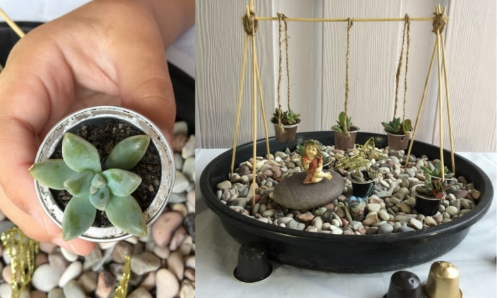 How to make succulent coffee pod planters