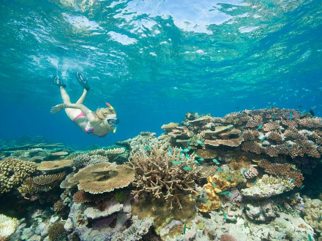 Best place on Earth? Great Barrier Reef ranked the No.1 place in the world to visit. Picture: Stuart Ireland