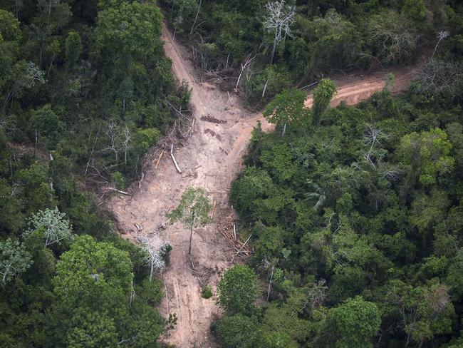 Illegal...an felling area in the Amazon jungle during an overflight by Greenpeace activists. Picture:AFP/ Raphael Alves