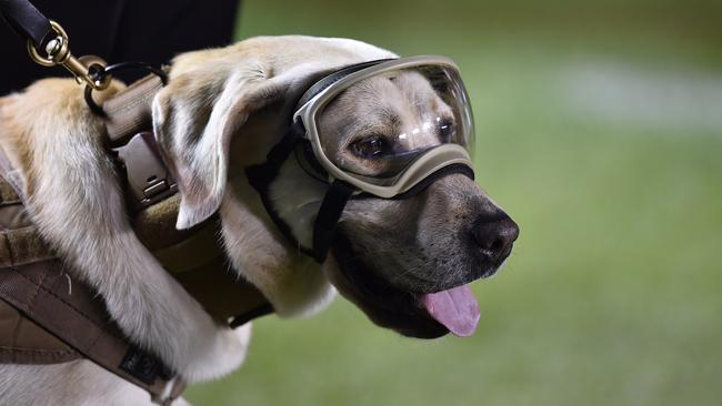 Mexican rescue dog Frida. Picture: AFP