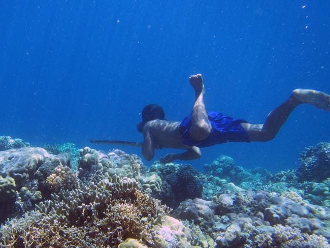 A Bajau diver hunting fish underwater using a traditional spear off the islands of Indonesia. Picture: Melissa Llardo