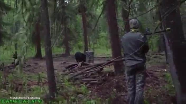 Hunter spears bear sparks outrage