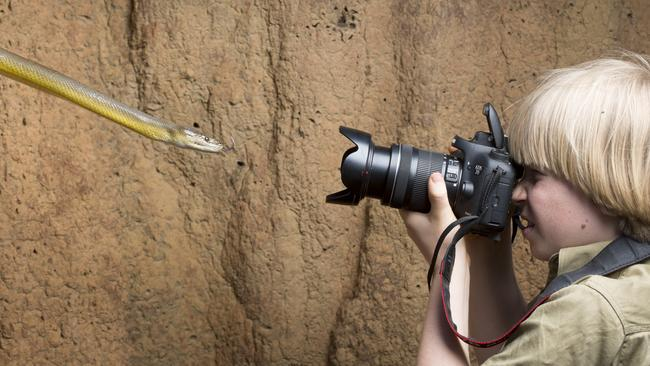 Fearless ... Robert Irwin photographing a snake. Picture: Australia Zoo