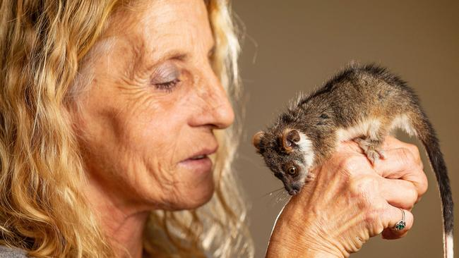 Pride of Australia nominee Michele Phillips has run a wildlife shelter in South Oakleigh for 25 years. Picture: Mark Stewart