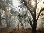 A firefighter douses spot fires on Sambell Rd, Humbug Scrub, on Sunday. Picture: Tait Schmaal.