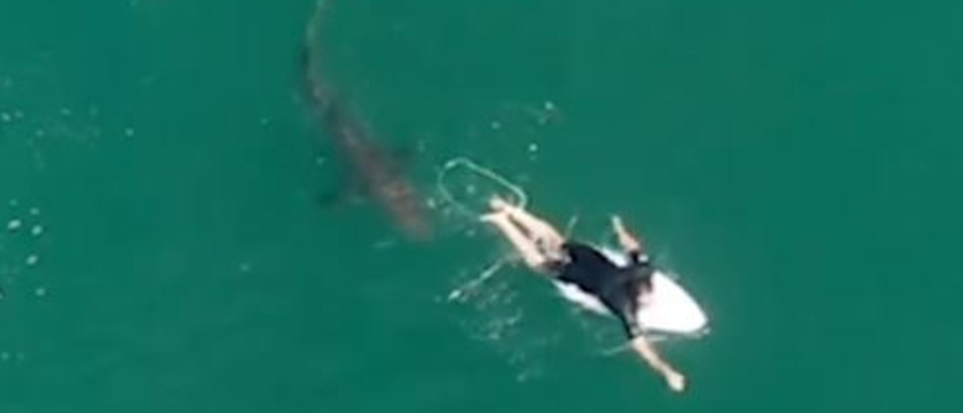The shark is seen approached Wilkinson as he paddled in the water. Picture: Surf Life Saving NSW