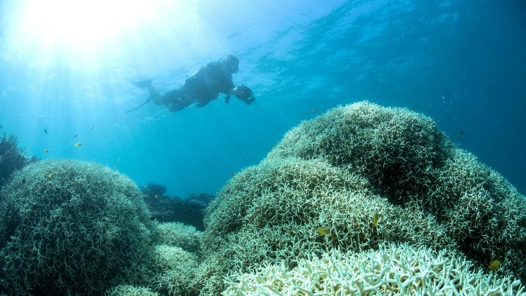 Great Barrier Reef Island May Not Fully Recover From Mass