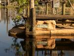Seth Lawless says he was told by ex park employees that the boats and fireworks polluted the waters. Eerie pics of the abandoned Disney River Country theme park in Florida, USA. Picture: Seph Lawless