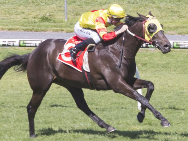 Savaheat wins at Morphettville. Picture: Atkins Photography