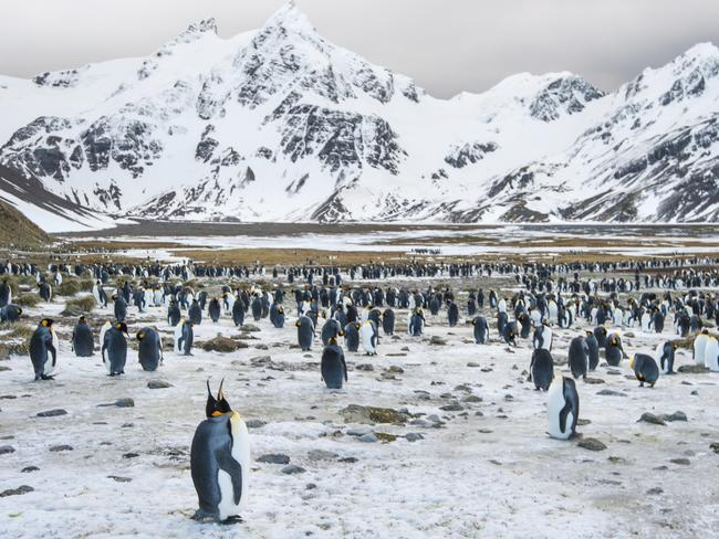 There are more penguins than people in South Georgia.