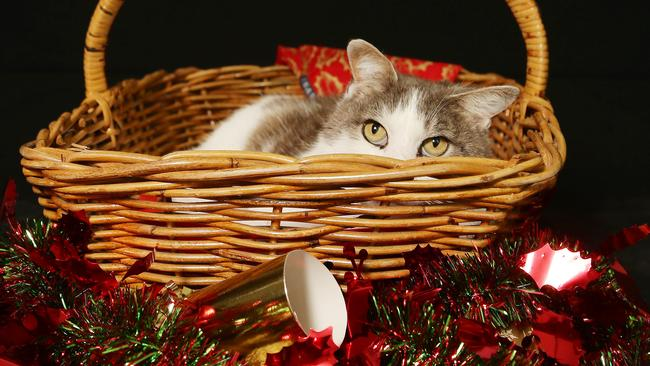 Christmas Hater.Denise Cullen I M A Christmas Hater So You Can Take Your