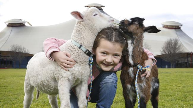 Chloe 6, with baby animals Sully the sheep and Wolverine the goat ahead of the 2019 Royal Melbourne Show. Picture: David Caird