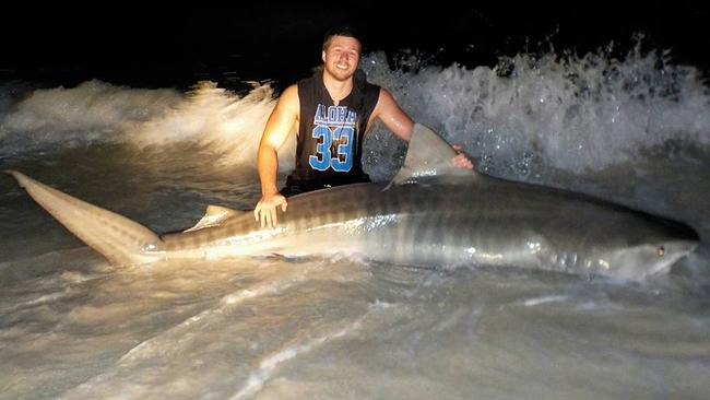 Another 3.86m tiger shark which Max caught this month.