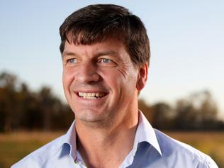 Liberal party needs to let Angus Taylor shine