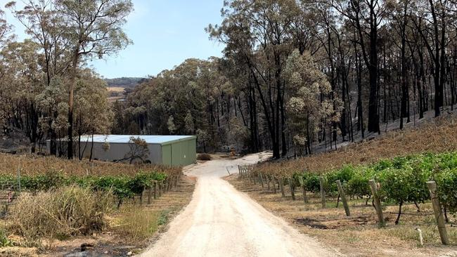 Beal & Co winery and vineyards after the Cudlee Creek bushfire. Picture: Callum Beal
