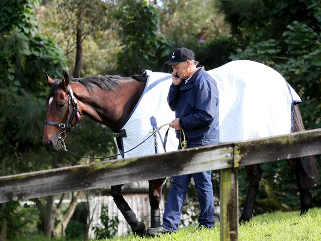 Peter Snowden at his new stables in Randwick. Picture: Damian Shaw