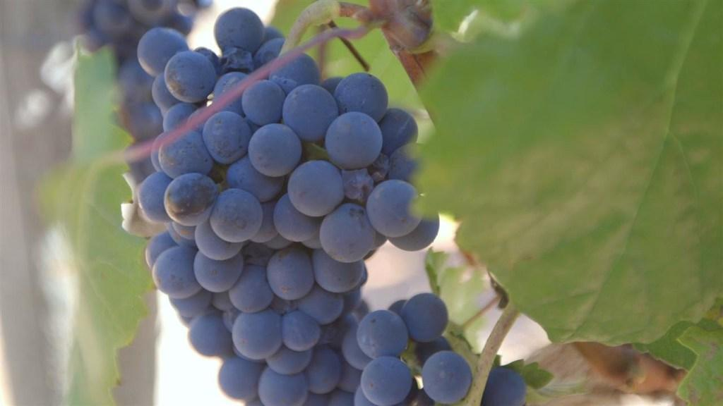 Impact of California's Drought on U.S. Wine Prices