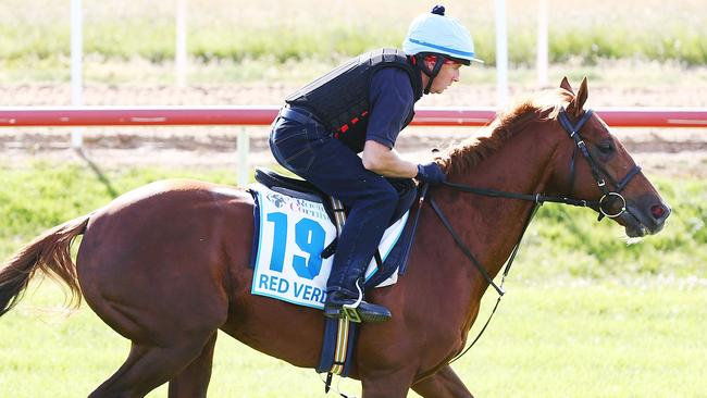 Red Verdon gallops during a trackwork session at Werribee.