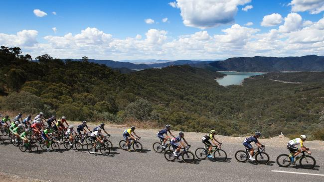 The peleton makes its way along Skyline Rd in Lake Eildon. Picture: Michael Klein
