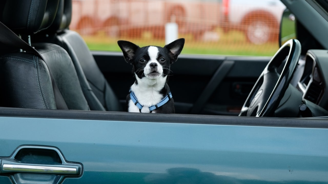 Dog owners could face jail time for leaving pets in hot cars