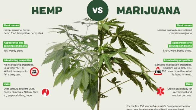 Hemp doesn't get you high, but it has over 50,000 uses. Picture: Elixinol Global