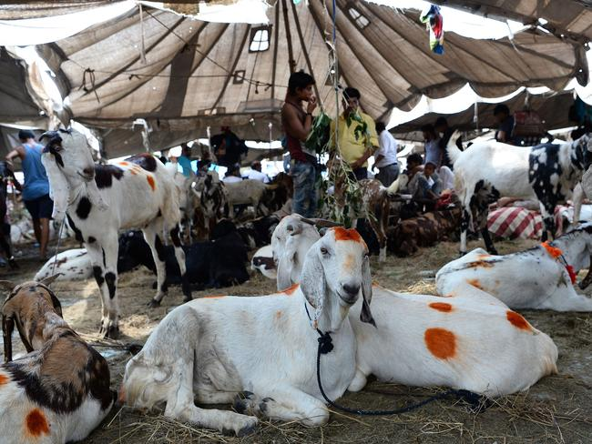 Indian vendors stand next to their goats for sale at a livestock market ahead of the sacrificial Eid al-Adha festival in the old quarters of New Delhi. Picture: AFP/Sajjad Hussain