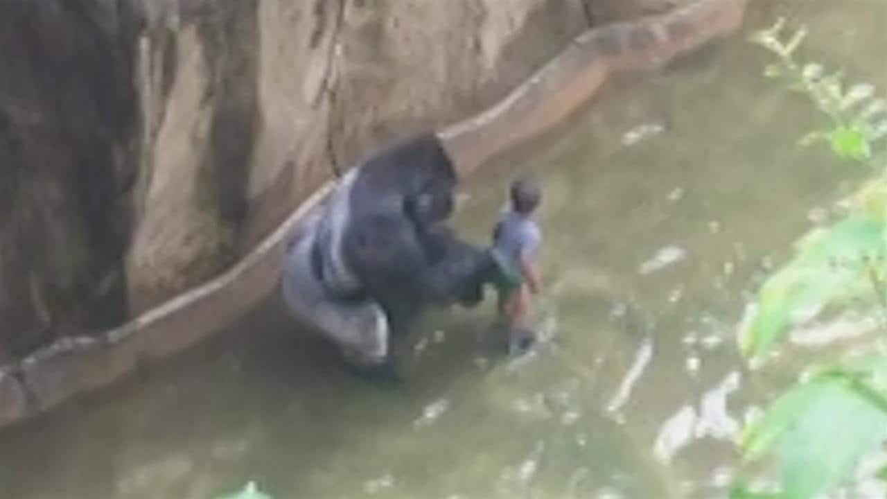Killing of Zoo Gorilla to Save Boy Triggers Outrage