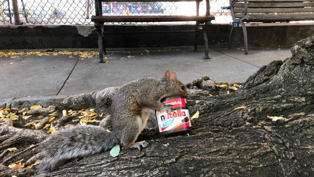 This squirrel is all of us.