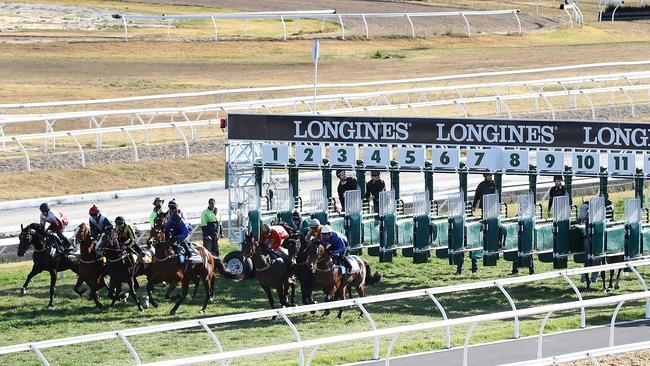 Chautauqua Stays Behind In The Barriers As Field Jumps Away A Barrier Trial At Rosehill Gardens Picture Getty Images