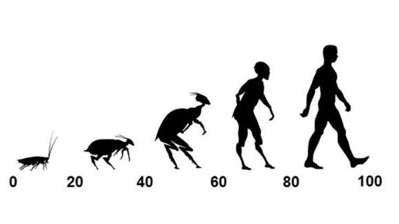 Researchers developed an 'insect to ape' evolutionary chart to cater to respondents calling cyclists 'cockroaches'.