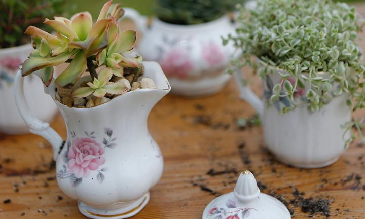 How to make a teacup garden